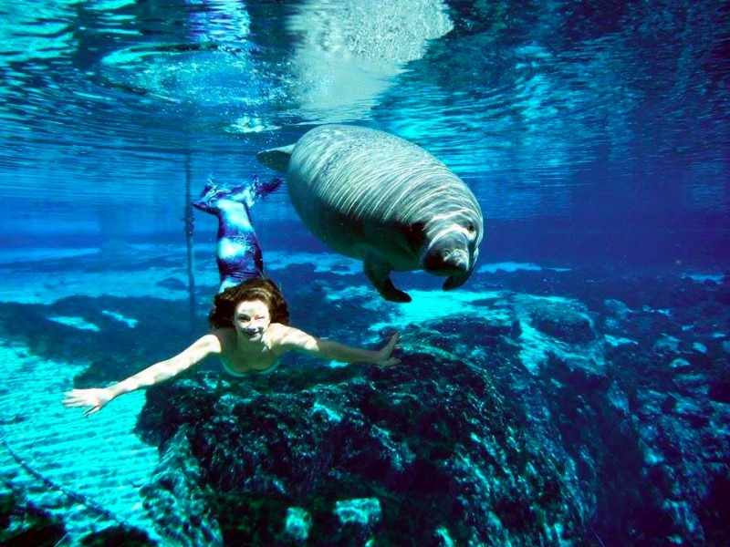 Hang With Mermaids At Weeki Wachee Springs in Florida