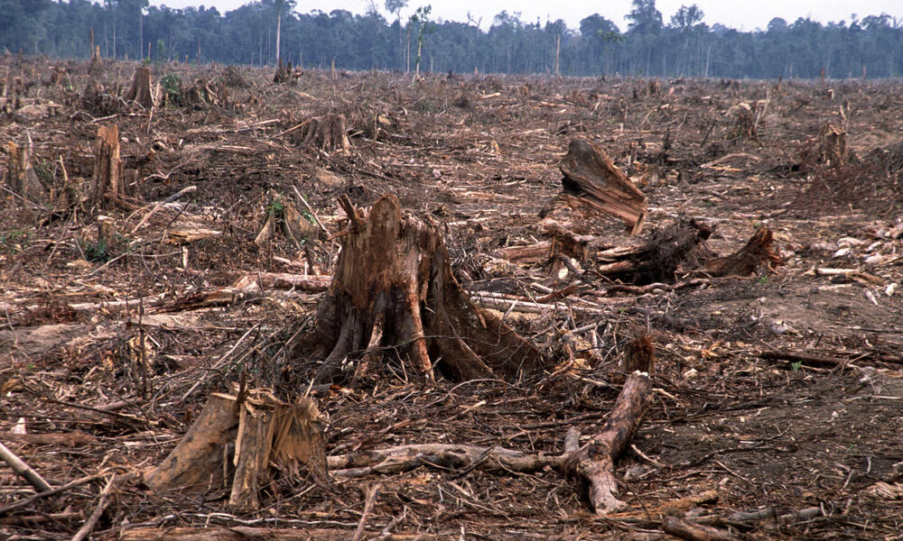 A lower level of soil infiltration and a higher level. Deforestation And Forest Degradation Threats Wwf