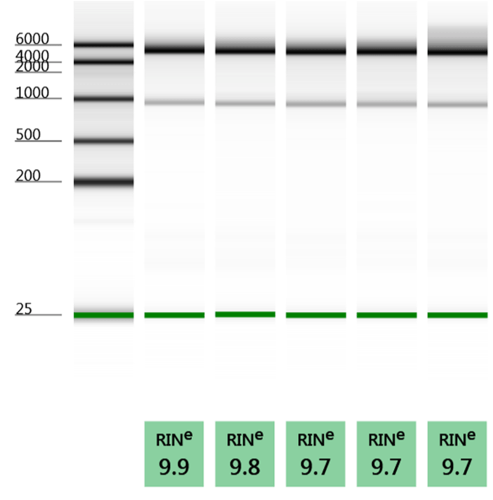 Quick RNA