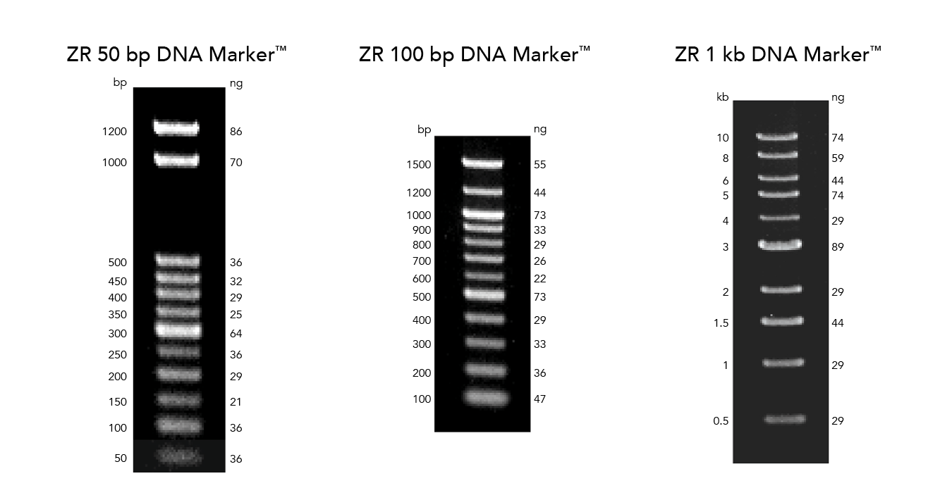 ZR 50 bp DNA Marker