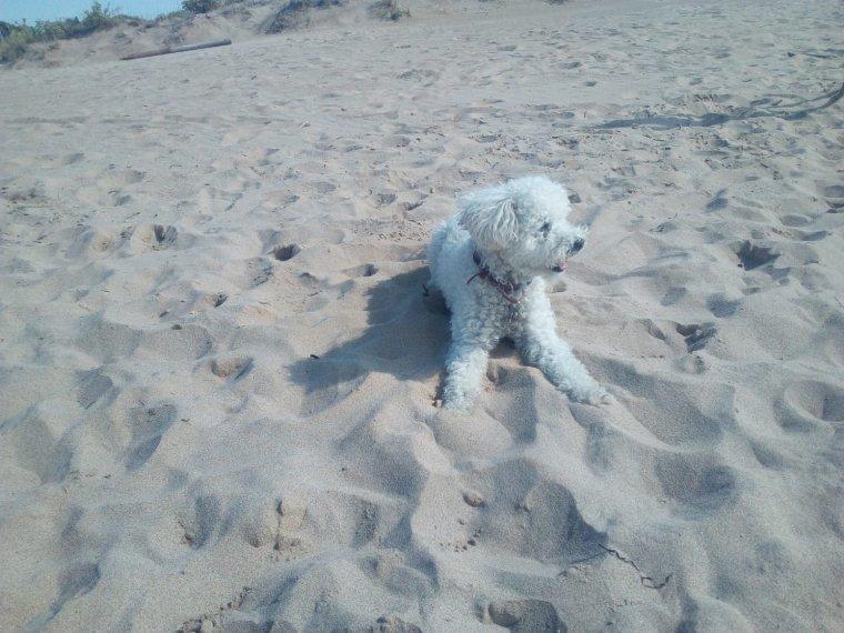 Gos a la platja