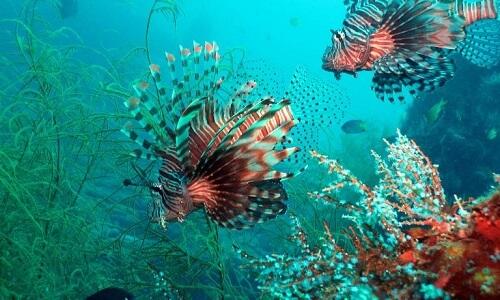 Zeereservaat Resort M01 - Coron Omgeving, Palawan, Filipijnen