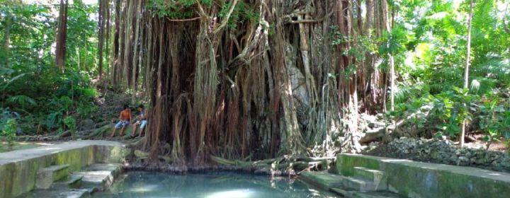 Balete Tree (ca. 4 eeuwen oud)