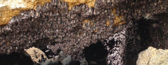 Montfort Bat Cave - Samal Island, Davao, Mindanao, Filipijnen