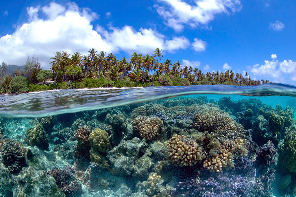 Coral Reef - The philippines