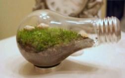 un piccolo mondo sotto vetro