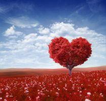 natura romantica