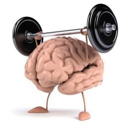 sviluppo cervello