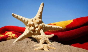starfish in the sand against a blue sky