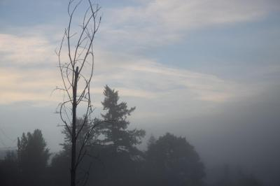 Foggy marsh 10-16-14