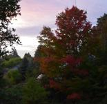 Sunset with maple 10-12-14