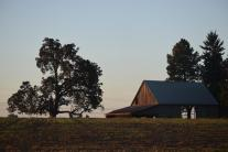 trees and barn