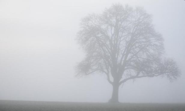 tree in fog 1-9-15