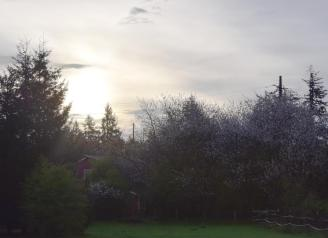 3-25-15 misty light