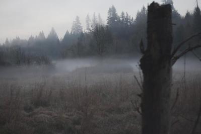 Fog in the wildlife preserve 3-10-15