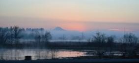 Misty pink Mt Hood 3-9-15