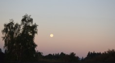 moon setting with willow tree