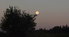 Setting moon balanced on branch
