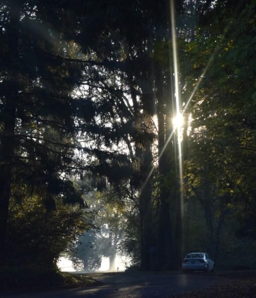 11-06-15 Fog Sun Trees