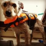 Fashionable Boat Dog