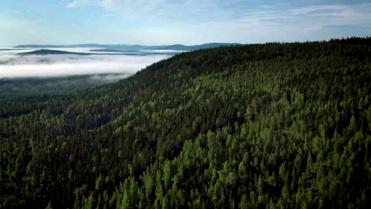 Co się kryje w szwedzkich lasach?