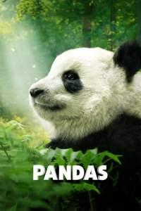Pandas: El Camino a Casa