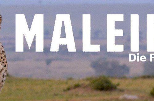 Maleika - Review | Filmkritik über Doku mit Gepardin