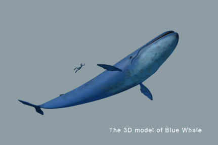 filmakes-arash-daemi-3d-modeling-006-blue-whale