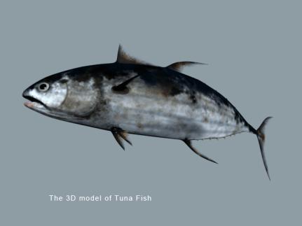 filmakes-arash-daemi-3d-modeling-008-tuna-fish