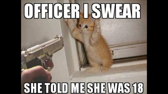 Check out these funny cat memes to help you through quarantine – Film Daily