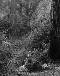 Romance of the Redwoods 10