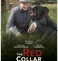 The Red Collar (2018) Online Subtitrat in Romana