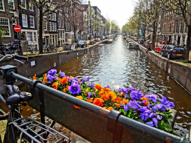 Spring flowers in Amsterdam