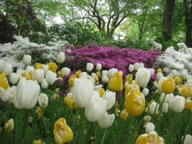 "Spring flowers in New York's Central Park – film location for ""Sex and the City"". Photo: filmfantravel.com"