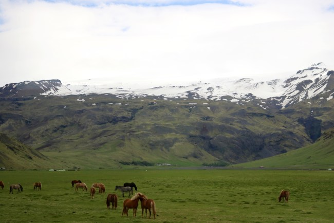 Horses on Iceland South Coast and Glacier Lagoon Tour