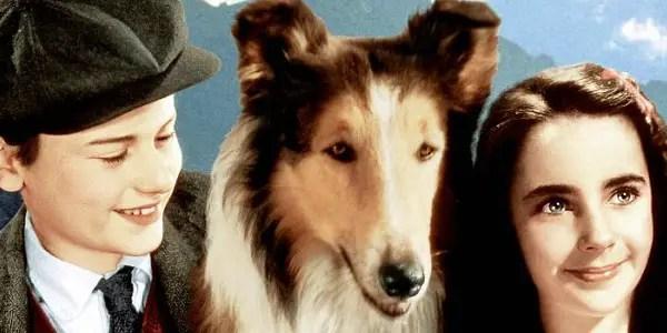 Lassie Come Home (1943) - source: Metro-Goldwyn-Mayer