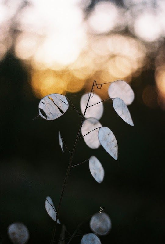 ultimos-dias-otoño-rymane-5