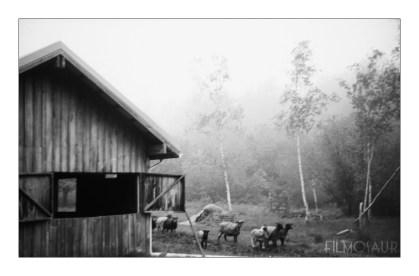 Leica IIIc, Leitz Summitar 50/2, Ilford FP4+ in Caffenol C-H(RS)