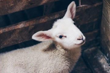 perchè indossare vestiti di lana in estate