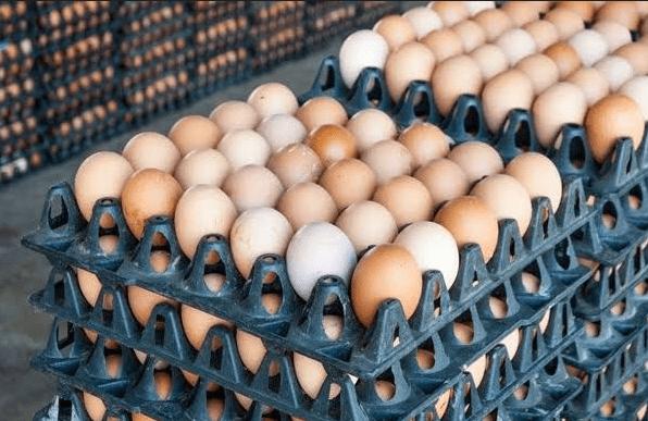 Egg Create