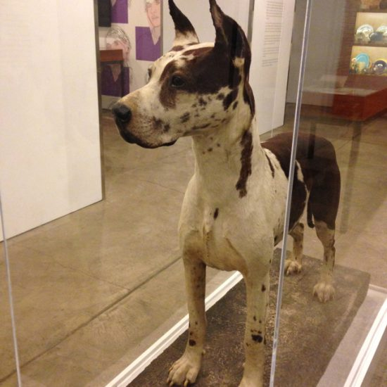 Andy Warhol's dog, Cecil