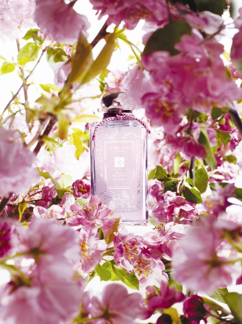 Orange Fall Peony Wallpaper Plum Blossom Jo Malone London Perfume A Fragrance For