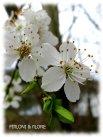 Frühlingsboten_3