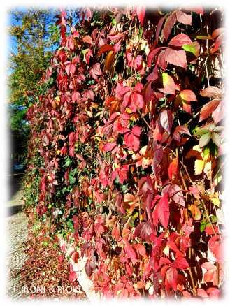 Herbst_8
