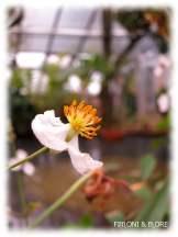 Botanischer Garten - Halle (Saale)