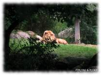Zoo_Leipzig_15
