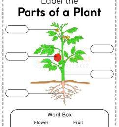 Plants Worksheets - [ 1087 x 768 Pixel ]