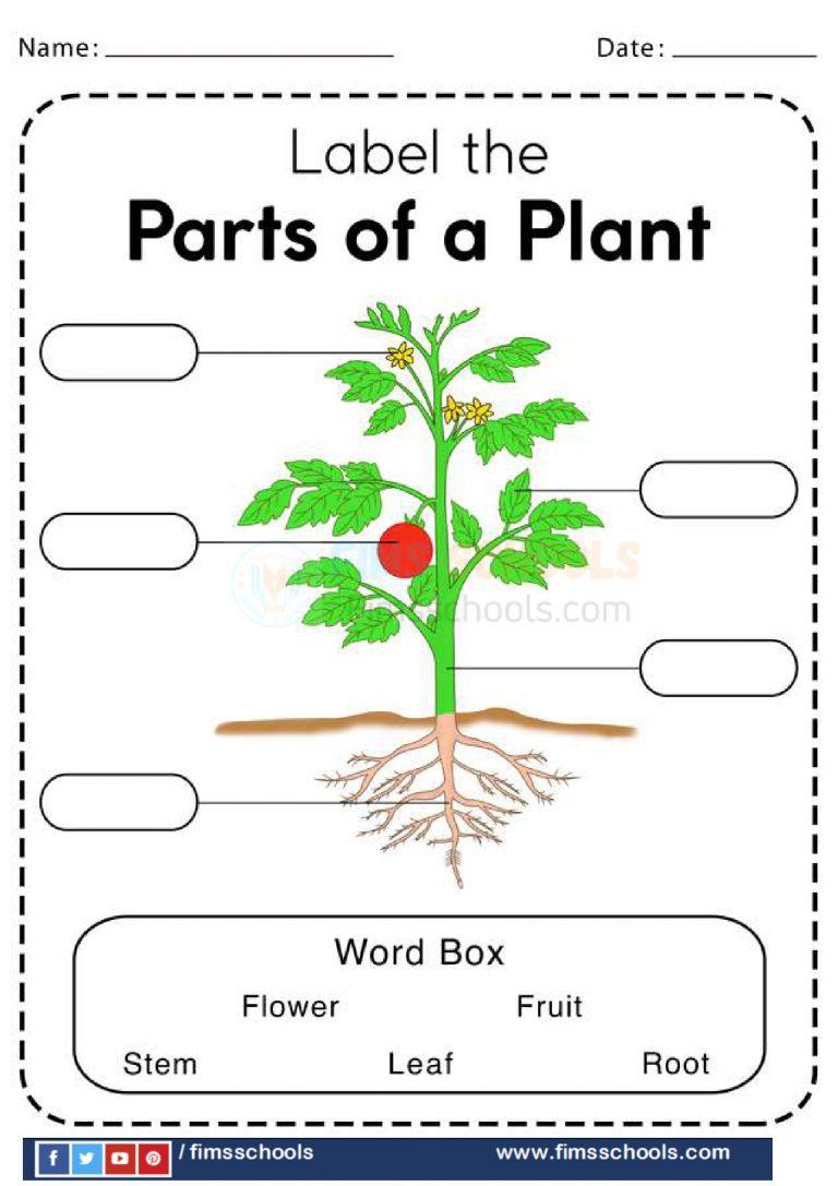medium resolution of Plants Worksheets -