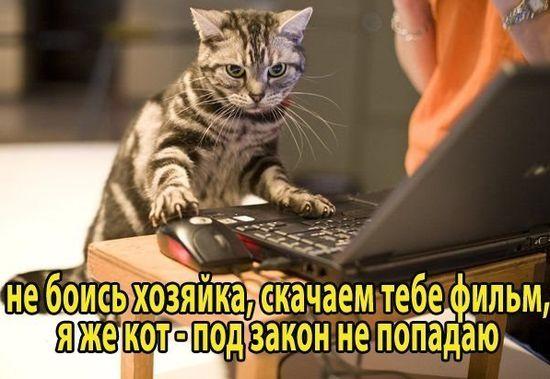 Кот - пират