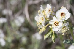 04Super Bloom